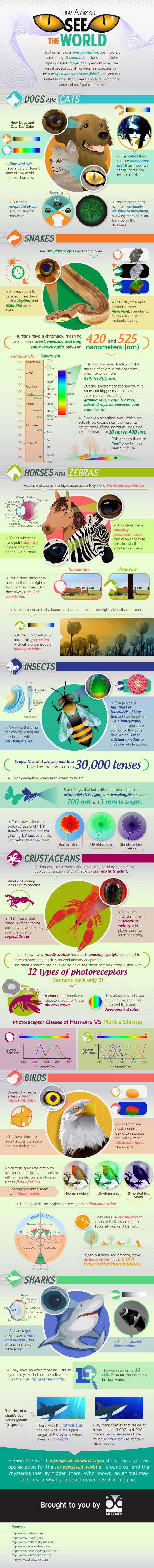 Cómo miran los colores los animales